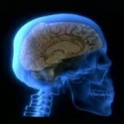 enciende tu cerebro la clave para la felicidad la manera de pensar y la salud edition books conocer el cerebro es clave para la felicidad mente