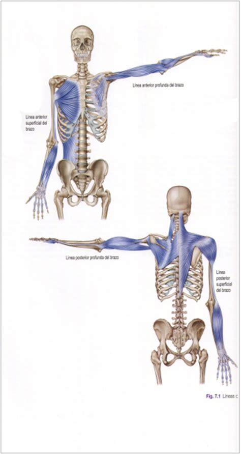 cadenas musculares espiral l 237 neas miofasciales corporal system