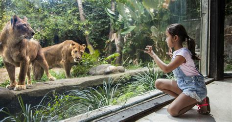 Bali Zoo Zoo With Lunch A Child bali zoo elephant expedition bali tours and more