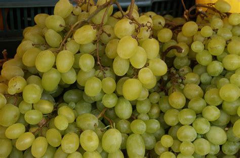 is grapes bad for dogs top 10 foods that are bad for dogs petguide