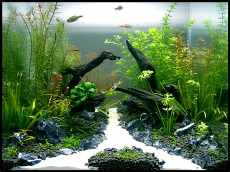 Substrate Aquascape by Il2fd S Planted Tanks Photo Id 26941 Version