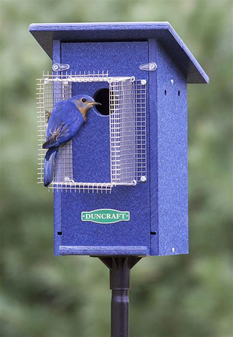 Bluebird Feeder 25 Best Ideas About Blue Bird House On
