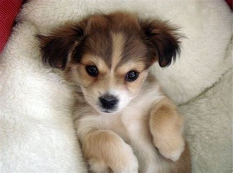 adorable dogs adorable dogs world inside pictures