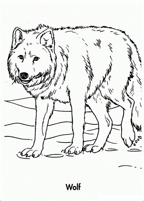 Galerry coloring pages of realistic wolves