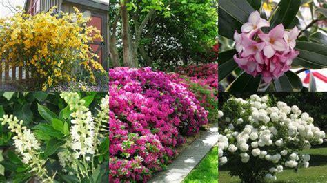 piante da ombra per giardino 12 arbusti ideali per la coltivazione in ombra guida