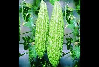 Paria Bajul F1 3 Benih jual benih sayur paria hijau f1 paperblog