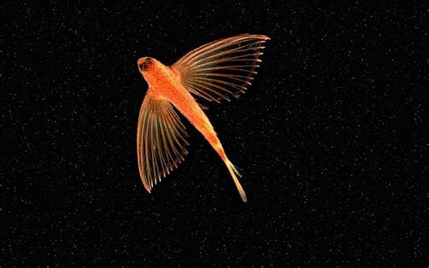 Outer Space Fishing Limited flying fish in outer space by coughcool on deviantart