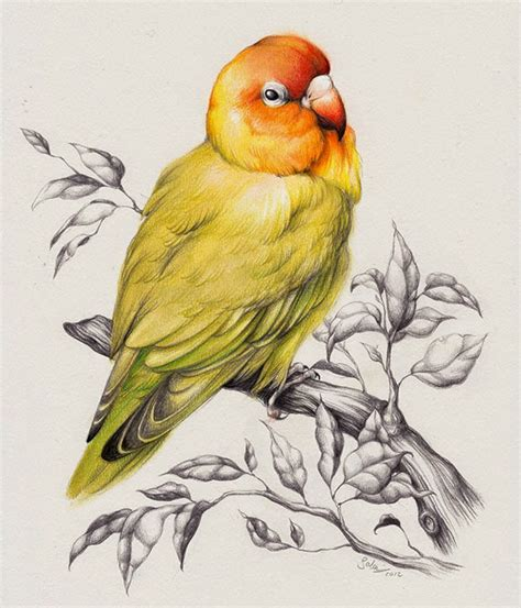 bird art drawing birds 25 best bird drawings for your inspiration fine art and you painting digital art