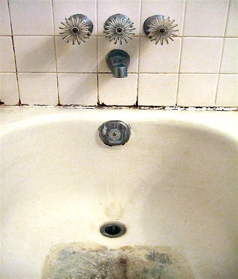 new phylum of bacteria found lurking in hospital sink s
