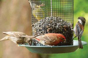 what do backyard birds eat what to feed wild birds nature and environment mother earth news