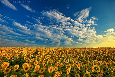 sunflower field what you need to take with you for landscape photography