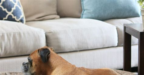 dog beds that look like couches dog beds that look like furniture brentwood home runyon