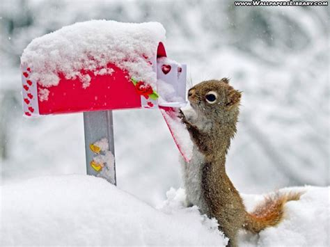 squirrel funny  interesting  images  funny  cute animals