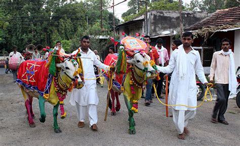 pola festival maharashtra india   festival packages hotels travelwhistle