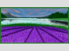 The Lavender Farm » drawings » SketchPort Eisenhower