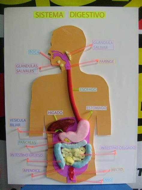 maquetas aparato digestivo maquetas aparato digestivo newhairstylesformen2014