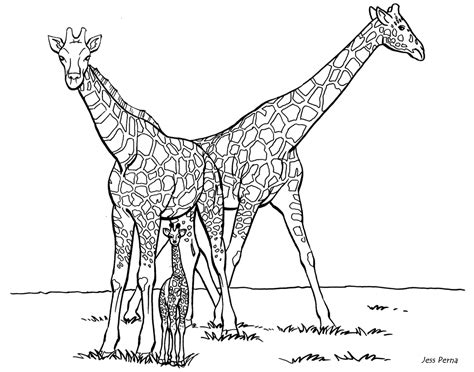 giraffe coloring pages for kids coloring home