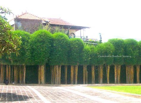 Garten Sichtschutz Pflanzen 172 by 172 Besten Garten Bilder Auf G 228 Rtnern Beton