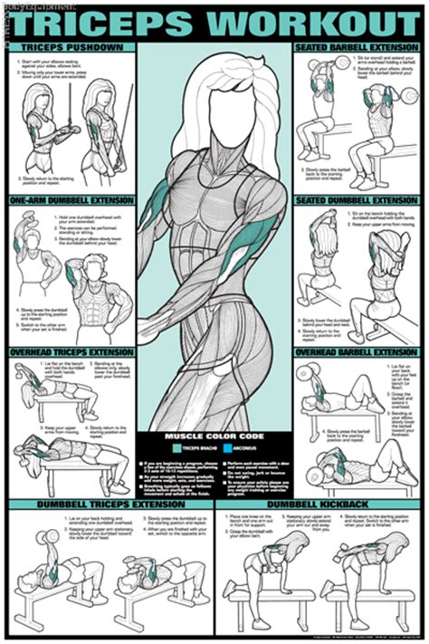 weight bench exercises poster tricep workout poster laminated