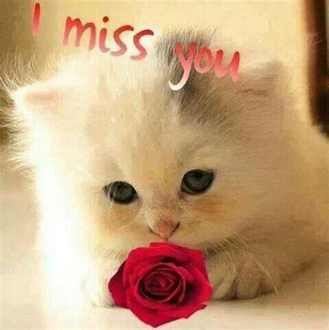 I miss you ..   CUTE BABY ANIMALS   Pinterest   I miss you
