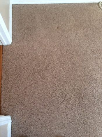 admiral rug cleaning carpet cleaning services admiral carpet cleaning fl