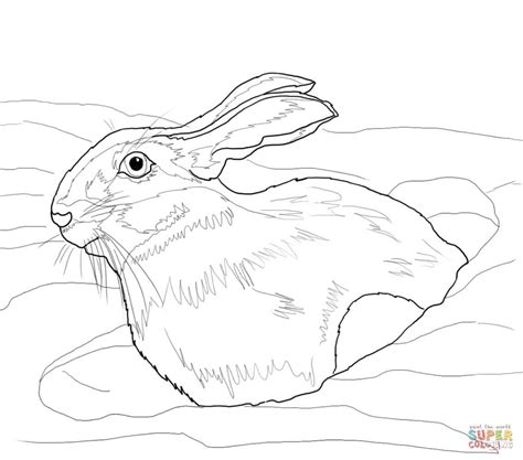 snow bunny coloring pages bunny rabbit coloring on pinterest peter rabbit