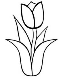 tulip coloring pages tulip outline coloring pages