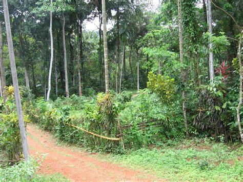 file home garden in matugma 2 jpg wikimedia commons