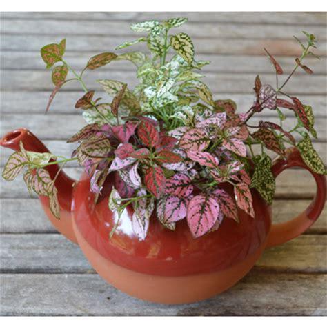 Large Teapot Planter by Clay Pottery Decorative Ceramic Pots Kinsman