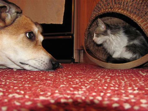 how to dogs and cats to get along cats and dogs get along 35 pics amazing creatures