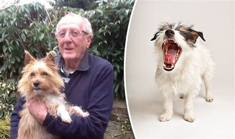 how to your to stop barking at visitors comee comee website