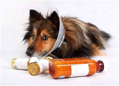 claritin for dogs 1000 ideas about pepto bismol dosage on safety your and