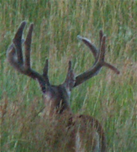 buck two two early buck secrets