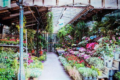 mercato fiori mercato dei fiori panoramio photo of amsterdam mercato
