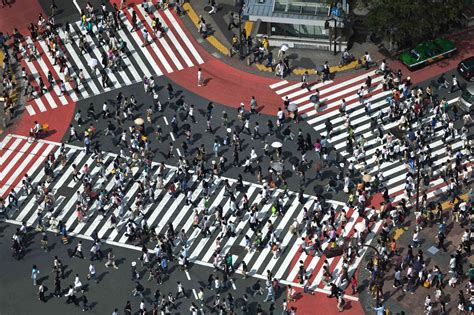 Zebra Wall Mural pedestrians crossing shibuya ward tokyo japan wall