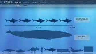 blog los ni 241 os ballenas delfines