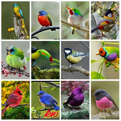 different types of beautiful birds beautiful other