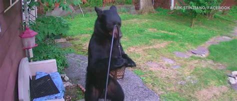 neighborhood dog chases  bear eating birdseeds