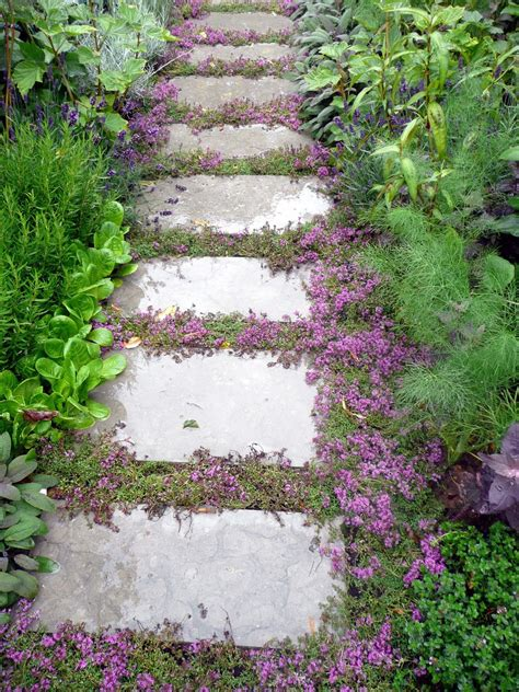 backyard ground cover top 10 plants and ground cover for your paths and walkways
