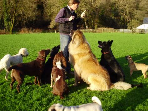 puppy obedience school uk services directory find trusted services fast