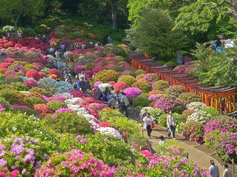 patio rhododendron liste rhododendron parkanlagen