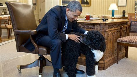 white house dogs obama going to the dogs when do presidents trot out the first pooch cnn political ticker cnn com blogs