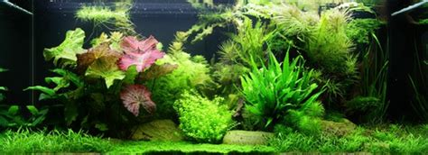 Asiatisches Gebirge by Layout 65 Tropica Tropica Aquarium Plants