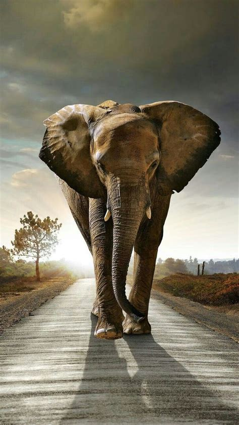 stunning beautiful elephant elephant elephant