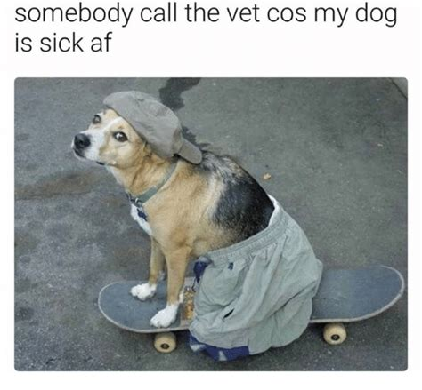 sick puppy meme somebody call the vet cos my is sick af af meme on sizzle
