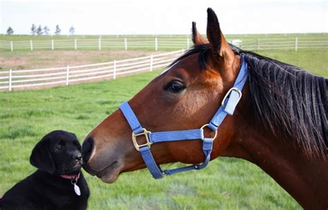 puppies and horses experience beneficial with dogs the bark