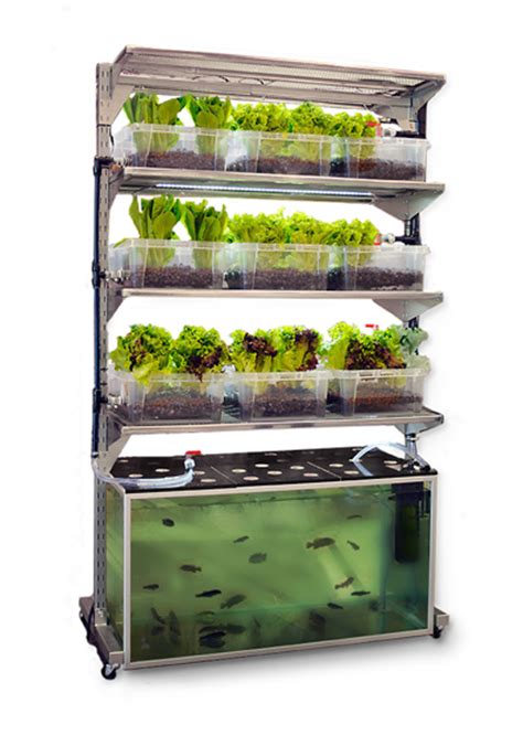 diy kitchen aquaponic system grows  meal  day  grid