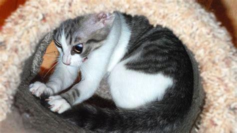 come scacciare i gatti dal giardino come scacciare i gatti dal giardino gallery of immagine
