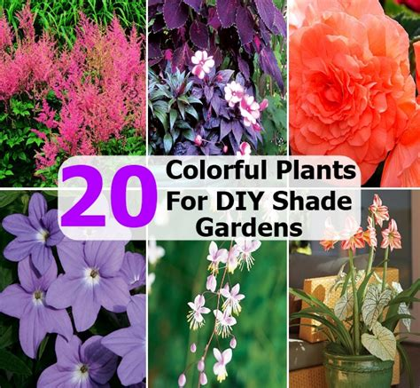 20 colorful plants for diy shade gardens diycozyworld home improvement and garden tips