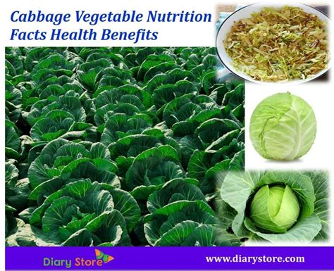 vegetables nutrition facts cabbage vegetable nutrition facts health benefits